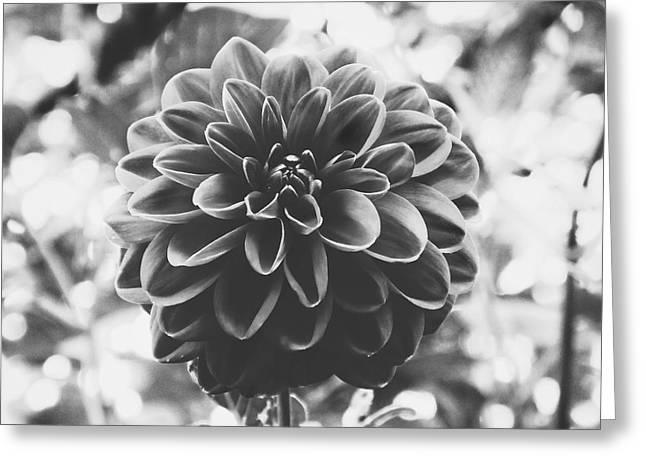 Noir Dahlia  Greeting Card
