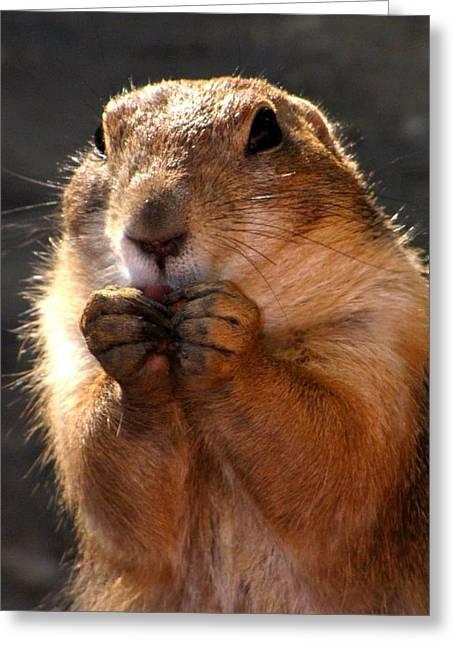 Snacking Prairie Dog Greeting Card