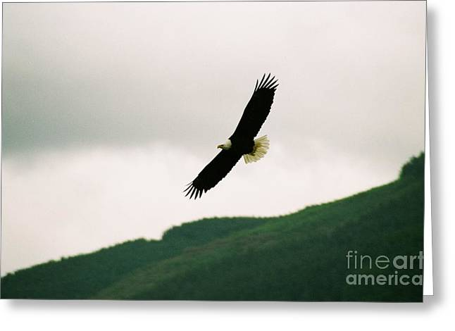 Nooksack Eagle Greeting Card by Brent Easley
