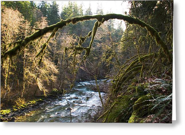 Greeting Card featuring the photograph Nooksack River by Yulia Kazansky