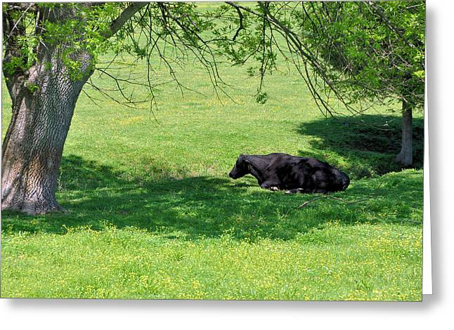 Noon Siesta Greeting Card by Jan Amiss Photography