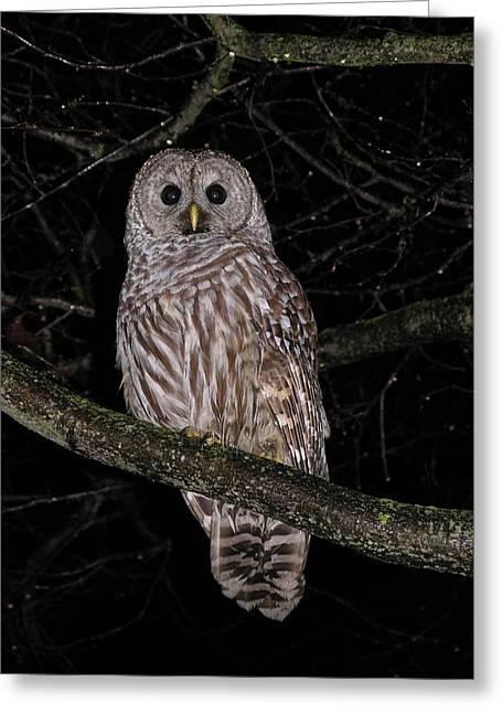 Nootka Owl Greeting Card by Nootka Sound