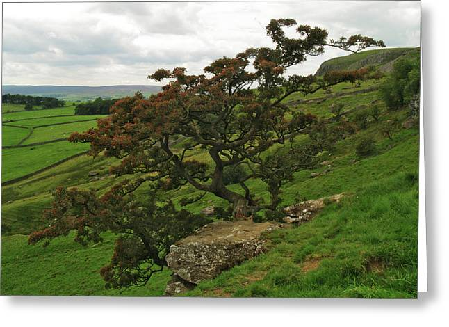 Norber Hawthorn Greeting Card by Steve Watson