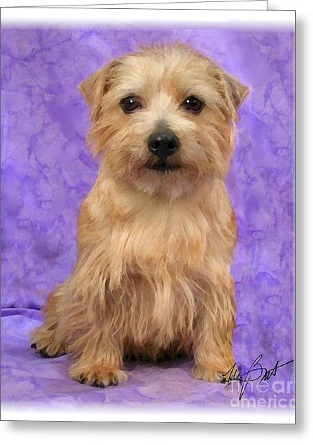 Norfolk Terrier Pup Greeting Card by Maxine Bochnia