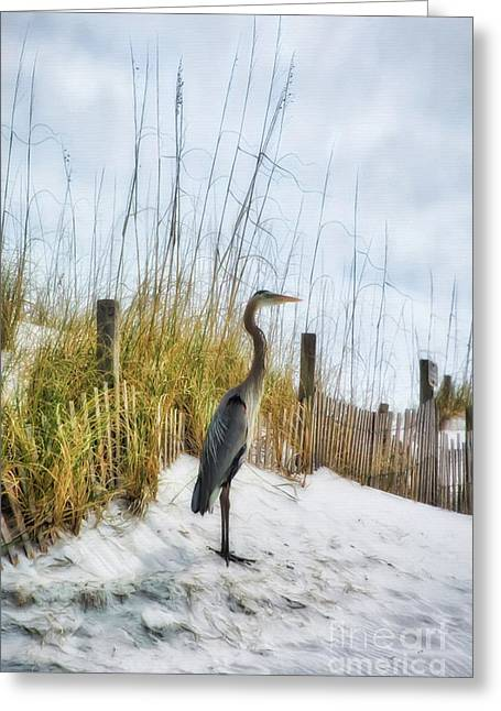 Greeting Card featuring the photograph Norriego Point Heron by Mel Steinhauer