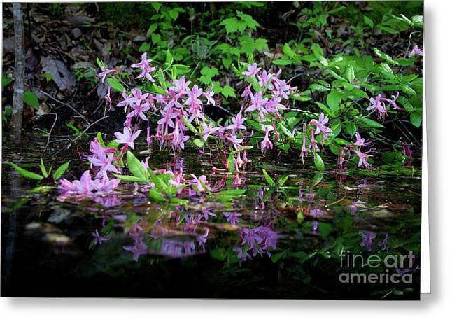 Norris Lake Floral 2 Greeting Card by Douglas Stucky