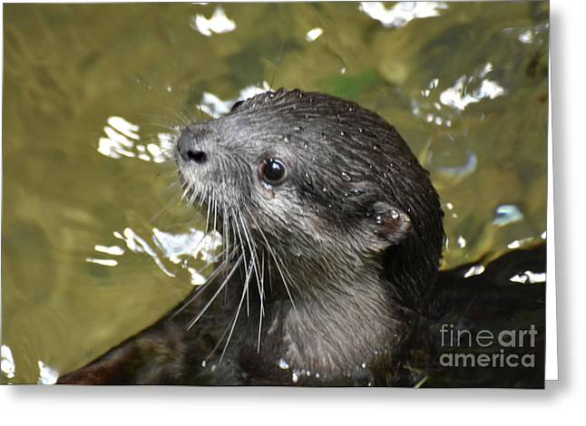 North American River Otter Swimming In A River Greeting Card