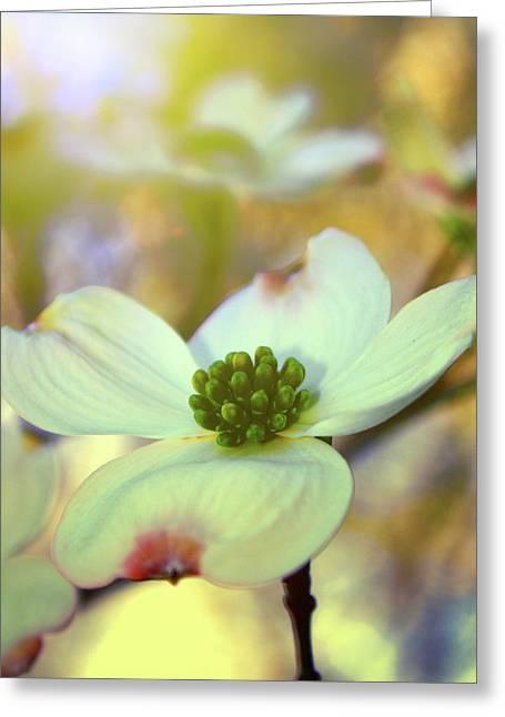 North Carolina Dogwood State Flower Greeting Card by Gray  Artus