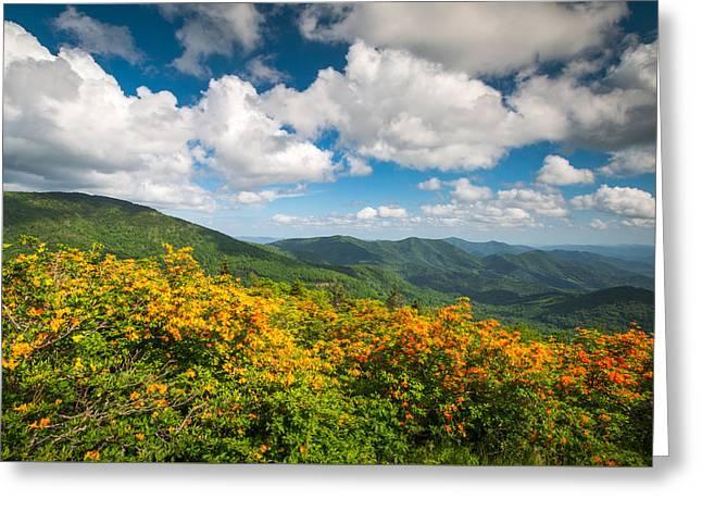North Carolina Roan Mountain Flame Azalea Flowers Appalachian Trail Greeting Card by Dave Allen