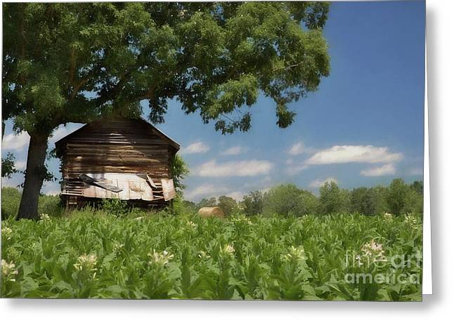 Greeting Card featuring the photograph North Carolina Tobacco by Benanne Stiens