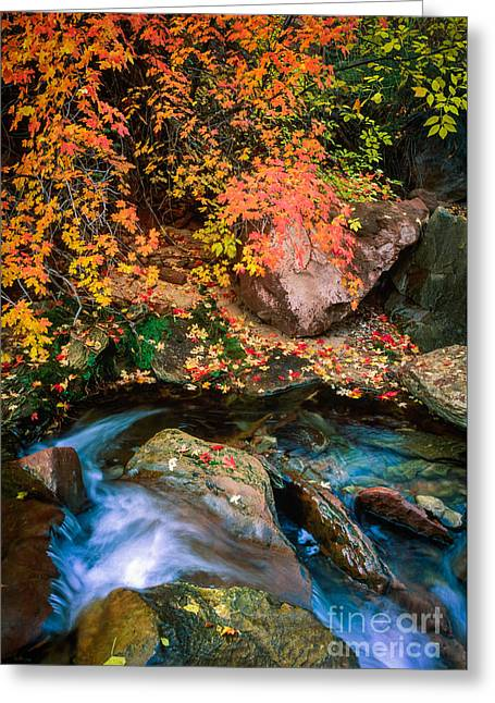 North Creek Fall Foliage Greeting Card by Inge Johnsson
