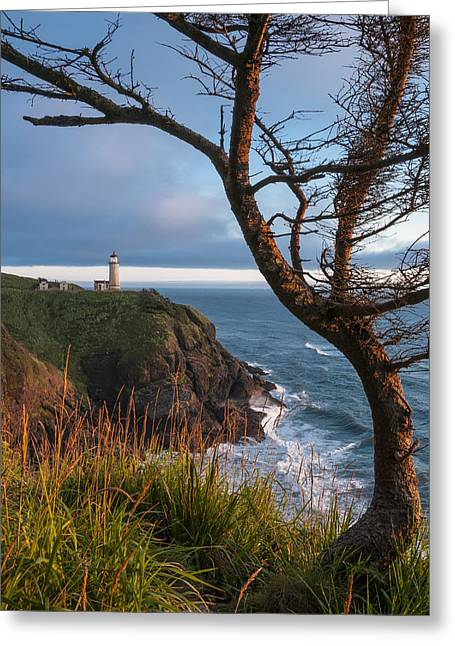 North Head Lighthouse 2 Greeting Card by Greg Vaughn