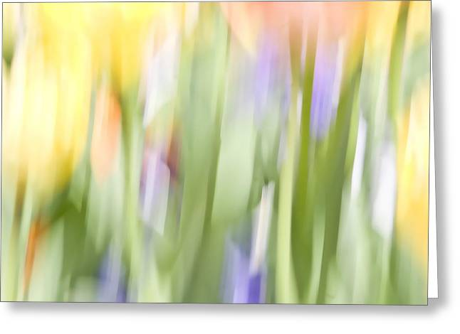 North Hills Tulips II Greeting Card