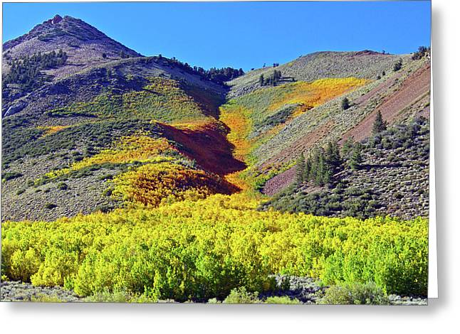 North Lake Aspen Stand Greeting Card