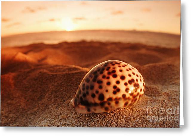 North Shore Seashell Greeting Card by Vince Cavataio - Printscapes
