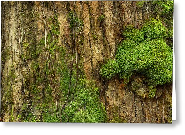 Greeting Card featuring the photograph North Side Of The Tree by Mike Eingle