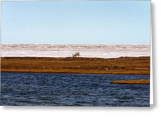North Slope Greeting Card by Anthony Jones
