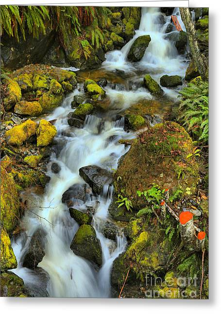 North Vancouver Island Waterfall Greeting Card by Adam Jewell