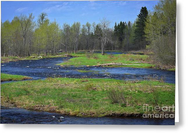 North Woods Dreams Greeting Card by Skip Willits