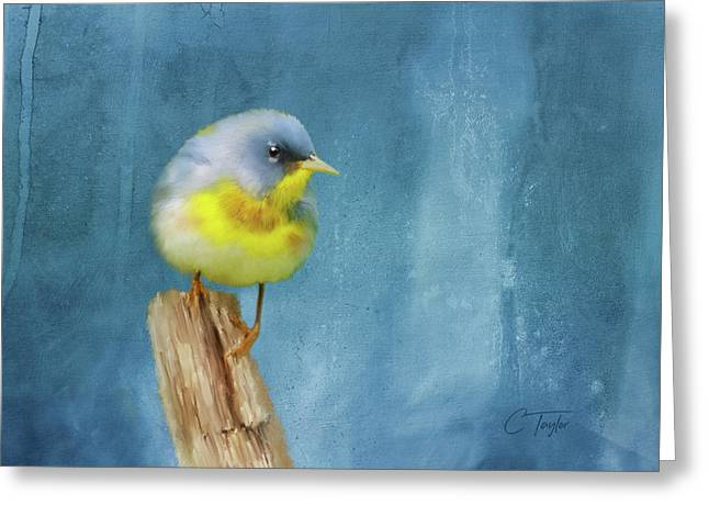 Northern Blue Song Bird Greeting Card by Colleen Taylor