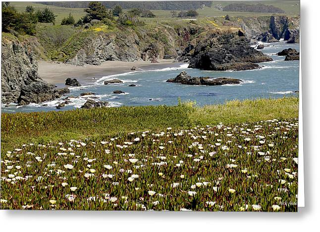 Northern California Coast Scene Greeting Card by Mick Anderson