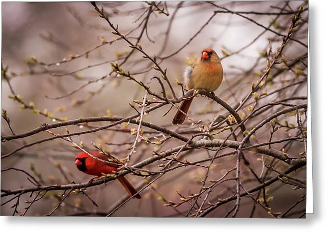 Greeting Card featuring the photograph Northern Cardinal Pair In Spring by Terry DeLuco