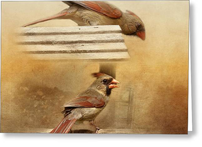 Northern Cardinals At Sunrise Greeting Card by TnBackroadsPhotos
