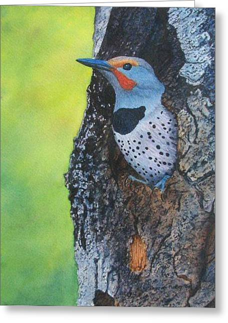 Northern Flicker Greeting Card by Sharon Farber
