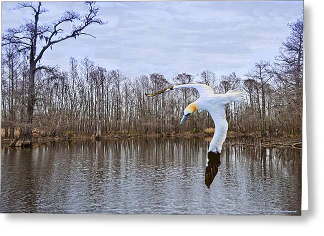 Northern Gannett In The Marsh  Greeting Card by Bill Perry