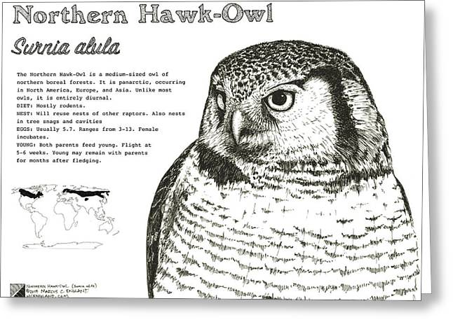 Northern Hawk-owl Infographic Poster Greeting Card