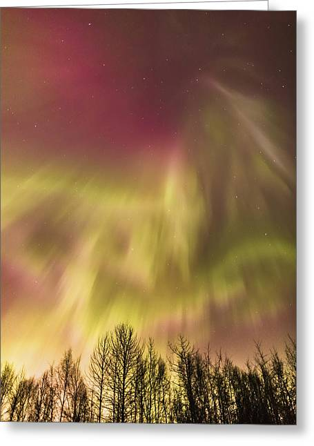 Northern Lights In The Sky Above Cook Greeting Card by Kevin Smith