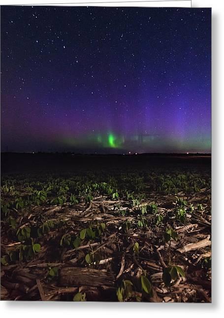Northern Lights Near Goderich  Greeting Card