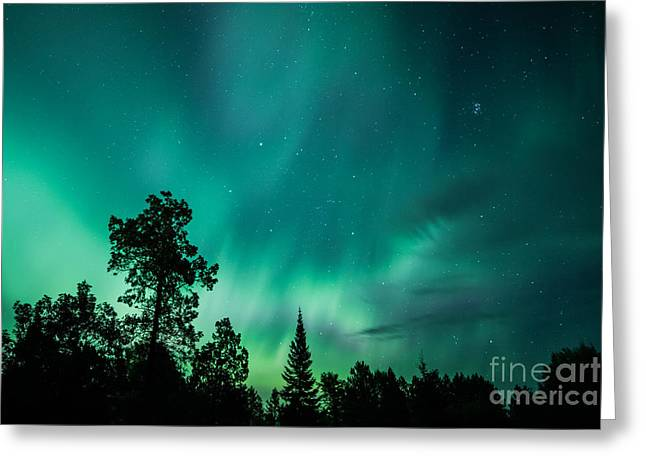 Northern Lights Tonight Greeting Card