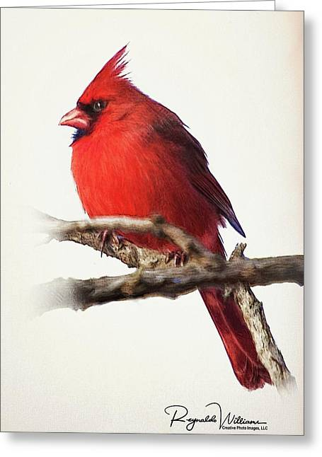 Northern Male Cardinal Greeting Card