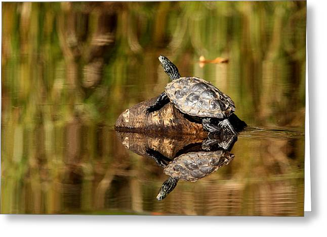 Northern Map Turtle Greeting Card