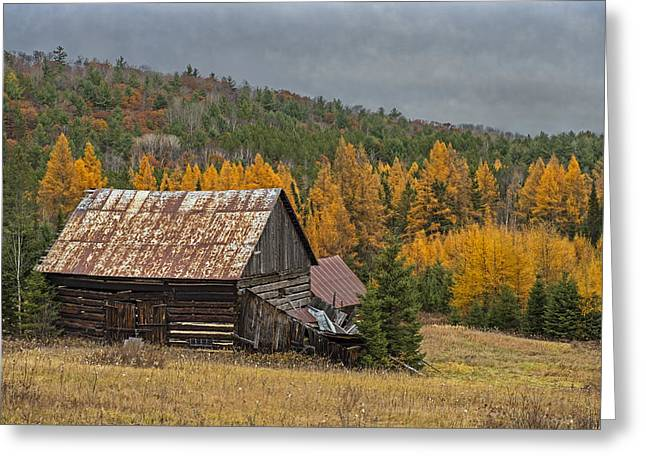 Northern Refuge Greeting Card by Tony Beck