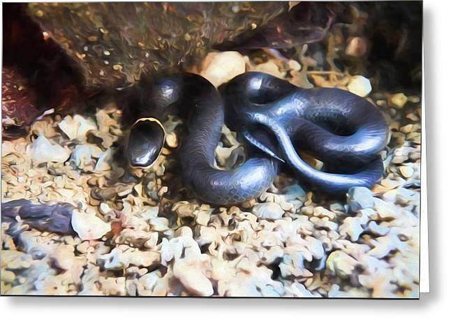 Northern Ringneck Snake Greeting Card by JC Findley
