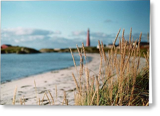 Norwegian Grass Greeting Card by Gregory Barger