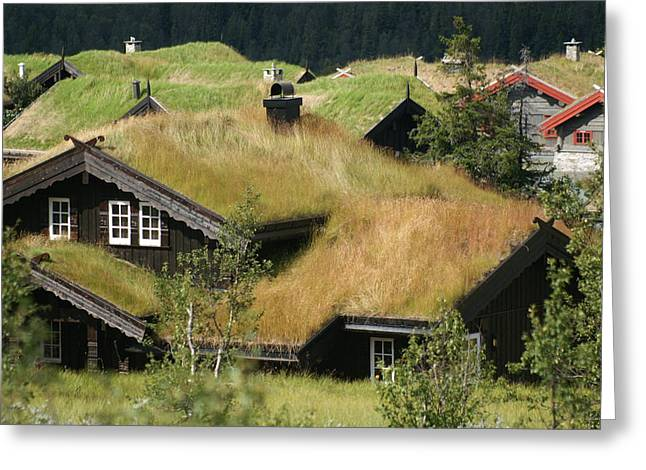 Norwegian Grass Roofs Greeting Card by Jessica Rose