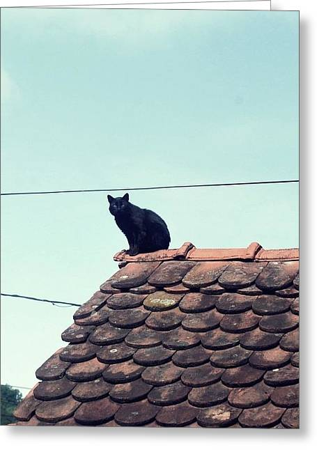 Not On A Hot Tin Roof Greeting Card by Marija Djedovic
