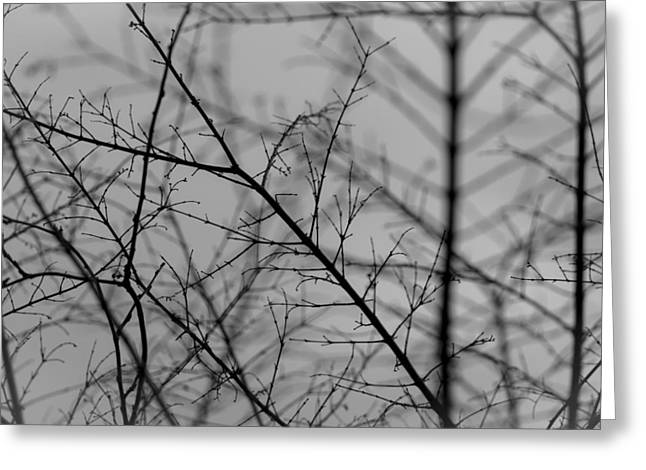 Greeting Card featuring the photograph Not Quite Spring by Andrew Pacheco