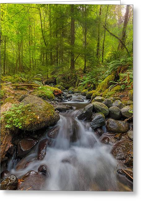 Not-so-dry Creek Greeting Card by David Gn