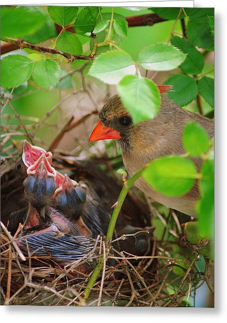 Parenthood Greeting Cards - Not so Wildlife Greeting Card by Frozen in Time Fine Art Photography