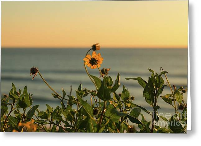 Greeting Card featuring the photograph Nothing Gold Can Stay by Ana V Ramirez