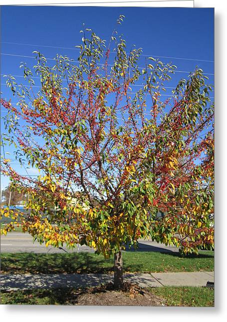 November Great Tree Display Greeting Card