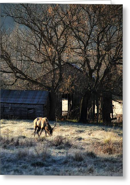 Greeting Card featuring the photograph November Sunrise by Michael Dougherty