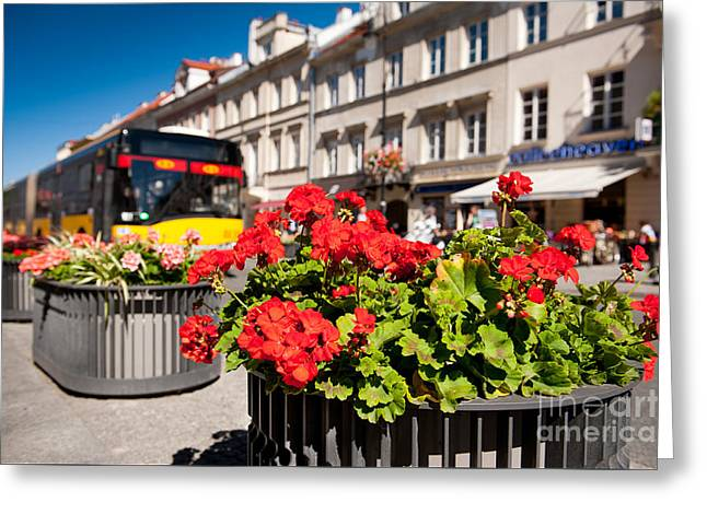Nowy Swiat Street And Red Geranium Greeting Card