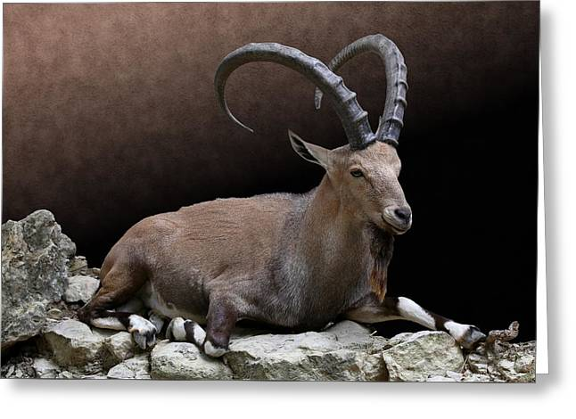 Nubian Ibex Portrait Greeting Card