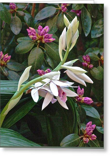 Nun Orchid Greeting Card