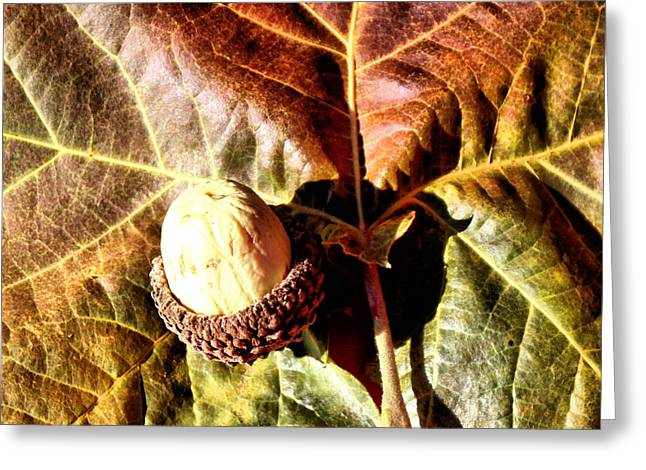 Nut On A Leaf Greeting Card by Karen M Scovill